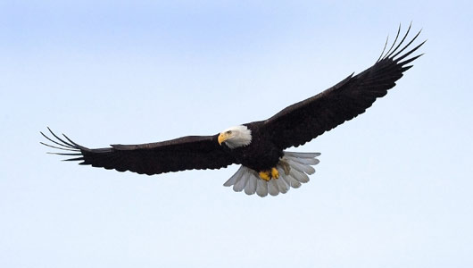 joseph morris facts about the eagle