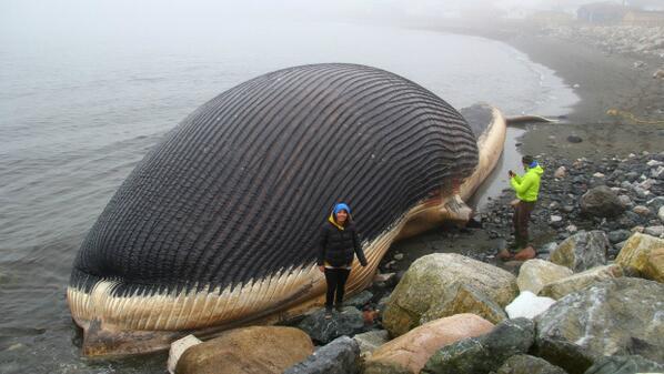 blue whale joseph morris
