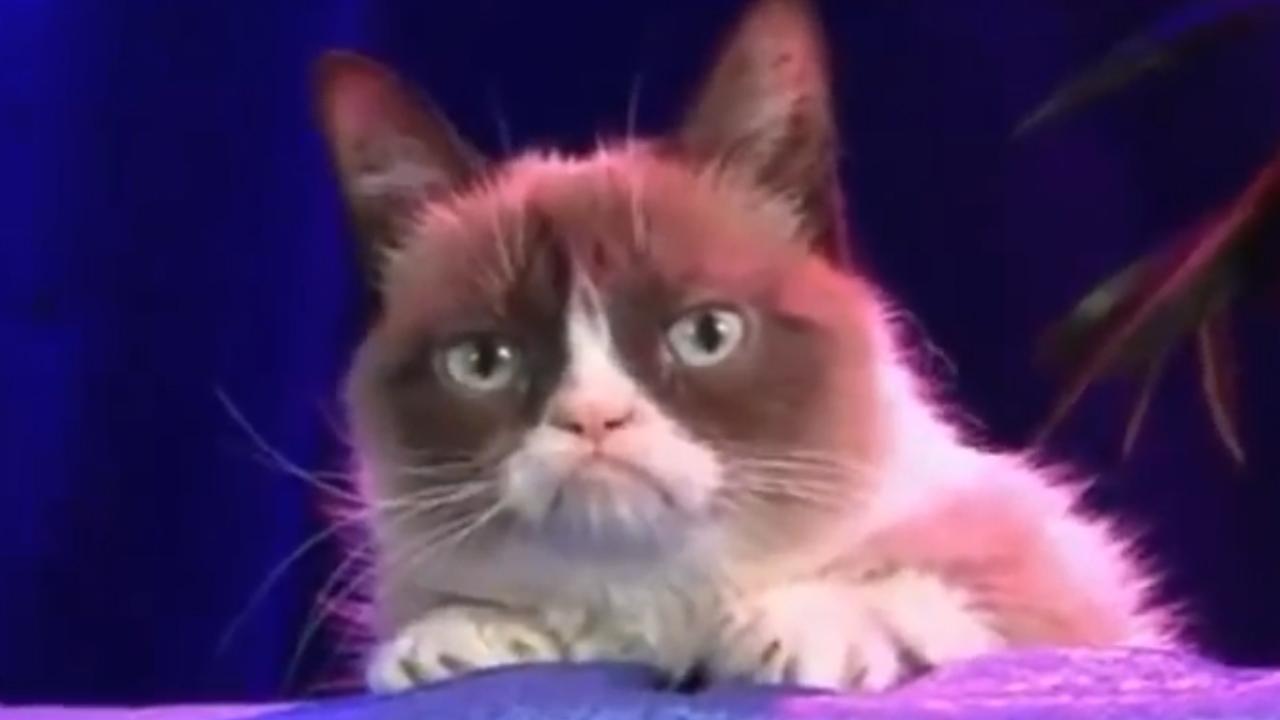 grumpy cat wwe raw