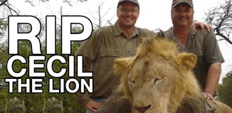 cecil-the-lion-walter-palmer